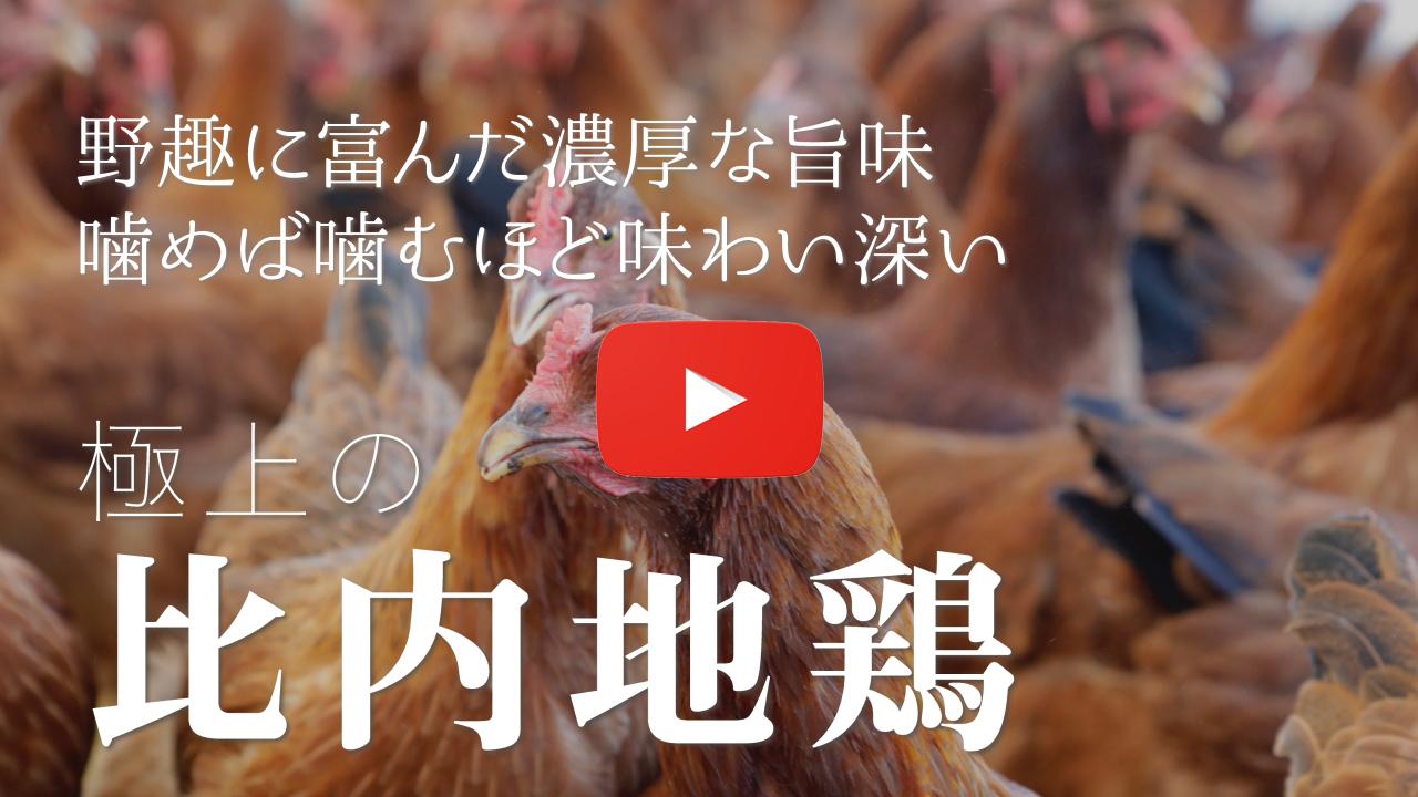 王国の比内地鶏たち