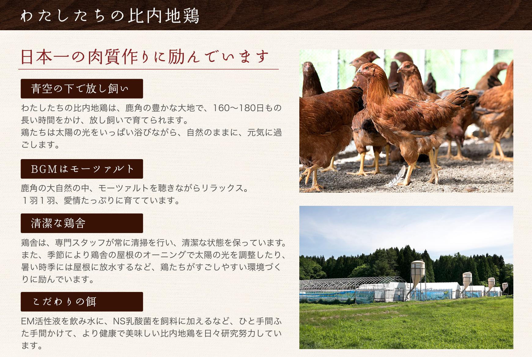 私たちの比内地鶏02