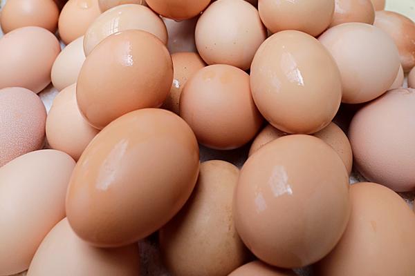大小様々な卵