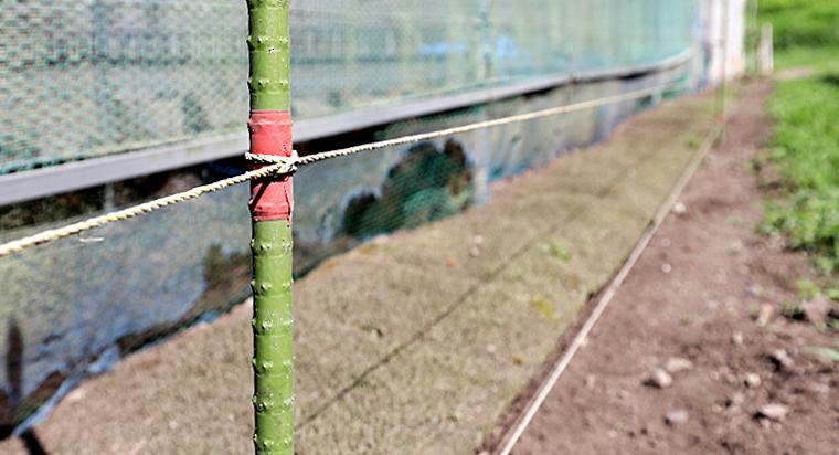 鶏舎の周囲を電気柵で囲っていますが、電線から放電しないように草刈り、雪寄せは欠かせません。