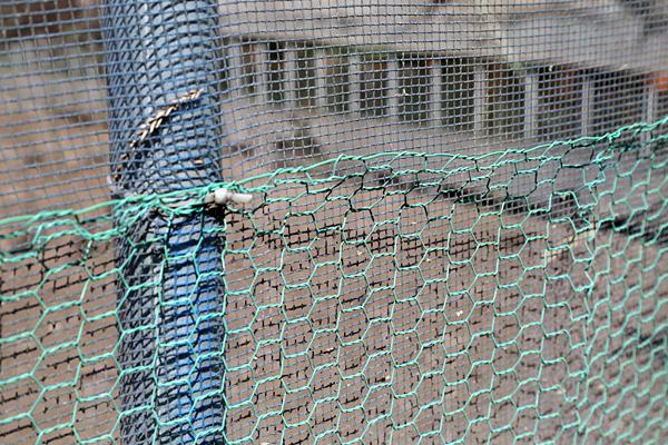 防風ネットと金網で渡り鳥対策